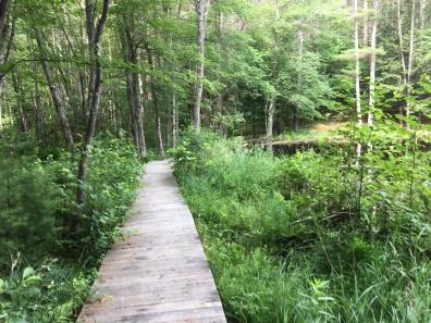 boardwalk along pond