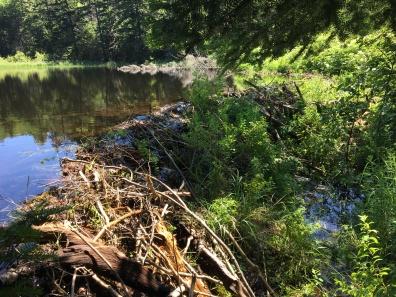 Hour Pond 4 - Beaver Dam