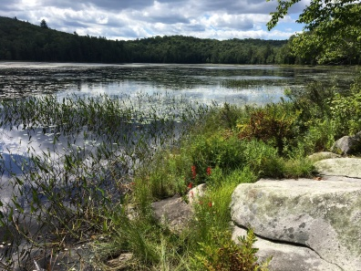 Cod Pond