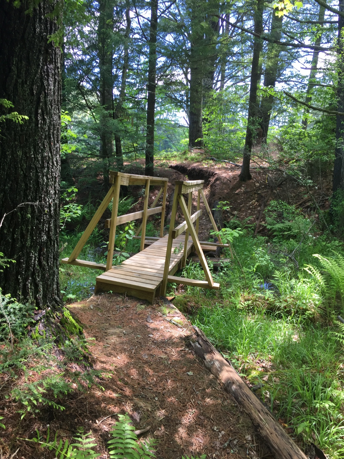 bridge along the trail