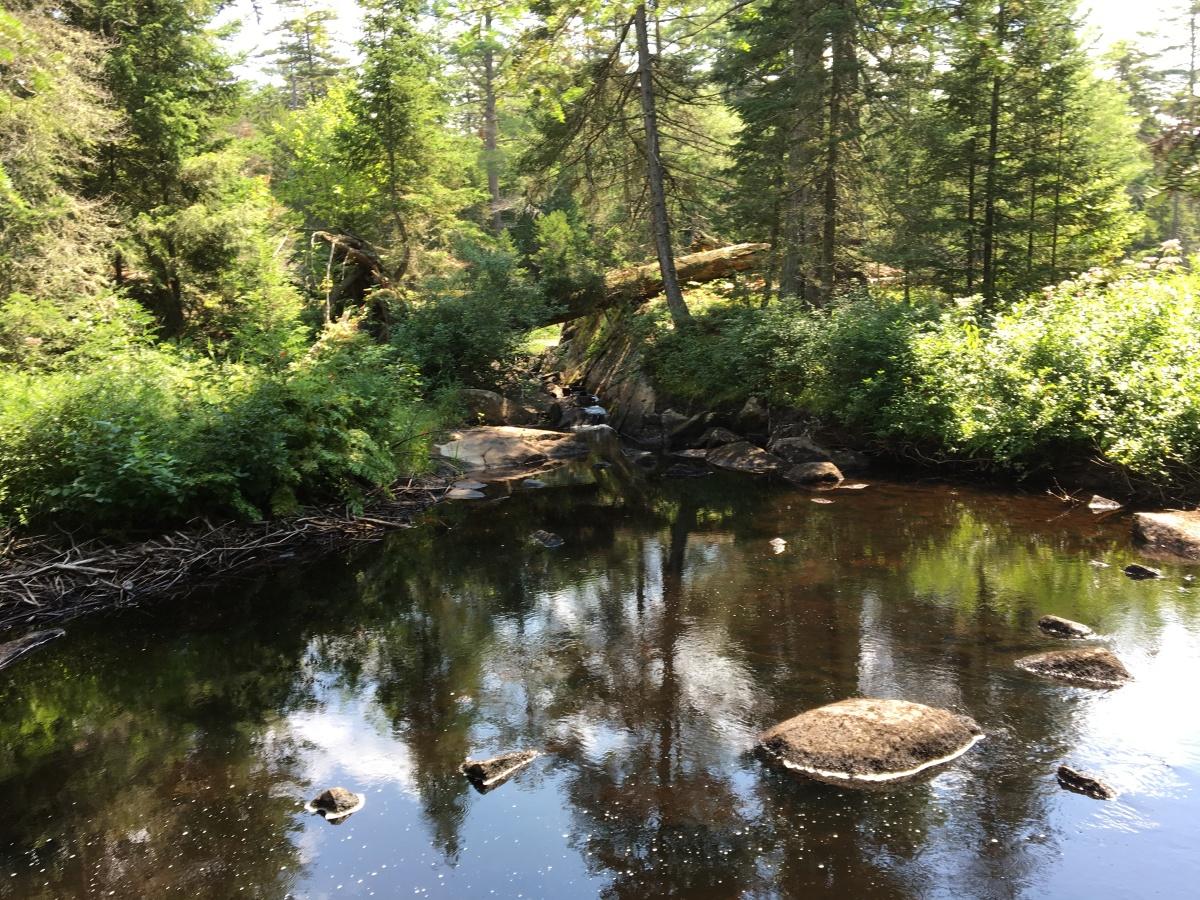 stewart creek 4