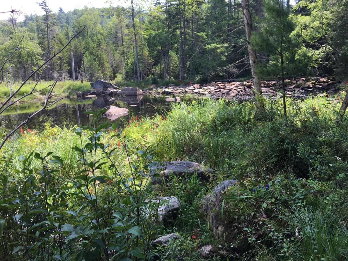 stewart creek 5