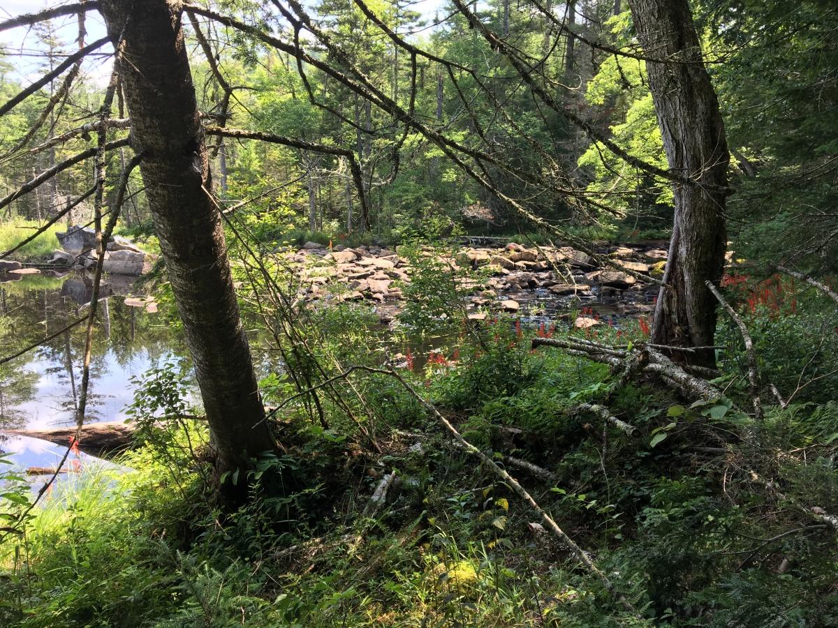 stewart creek 6